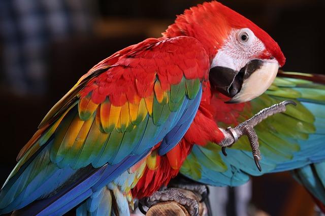 papoušek v pralese